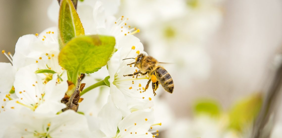 Bienenstich Gesundheit Hausmittelchen Blog Tipps Hacks