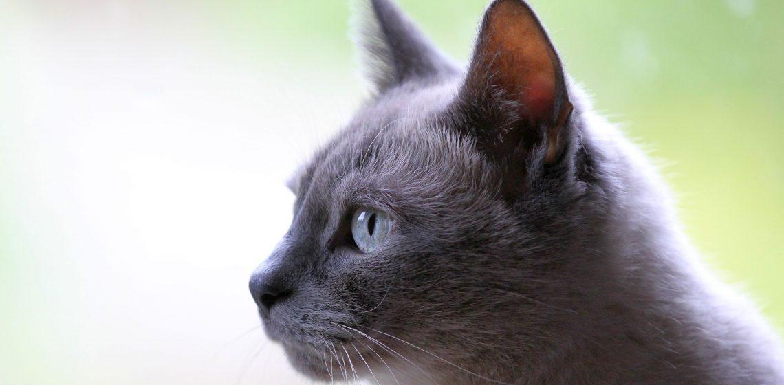 Katzenklo Hausmittelchen Blog Tipps Hacks