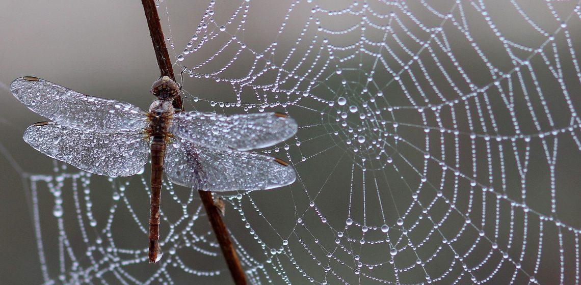 Spinnen Hausmittelchen Blog Tipps Hacks